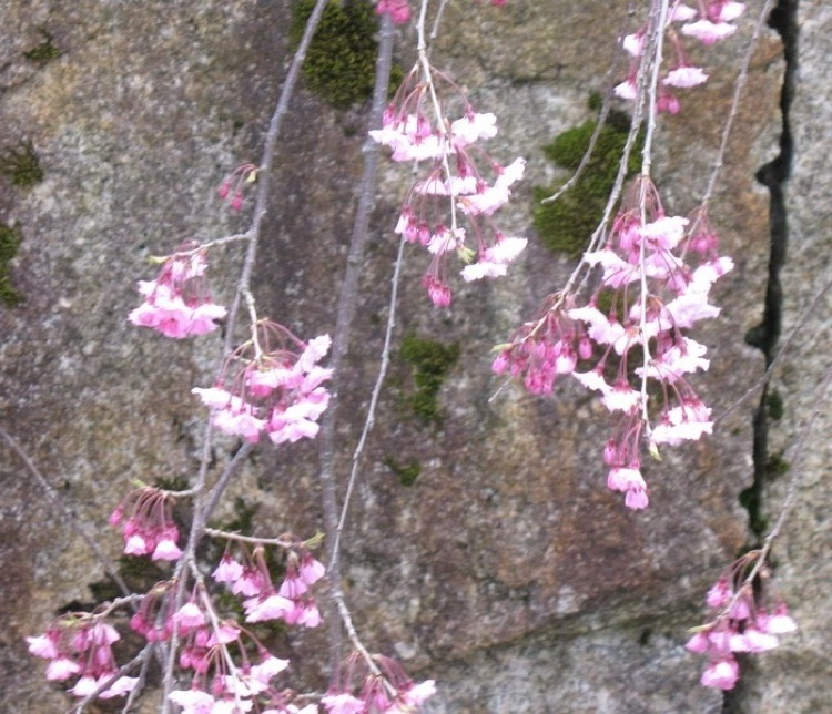 Some flowers on a stone wall.